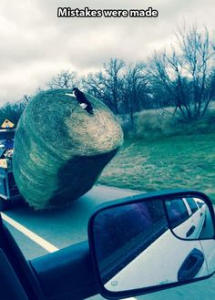 Cat on a hay barrel