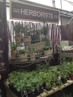 Herbs Witch Herbs, Most Beautiful Gardens, Garden Centre, Shrubs, French Country, Home And Garden, Gardening, Landscape, Business