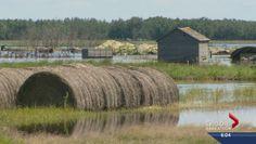 Flooding in Saskatchewan sinks farmer's harvesting hopes