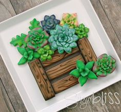 Succulent cookie