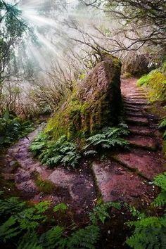 Na ilha da Madeira, Portugal.   Fotografia postada por Shamim Anwar.