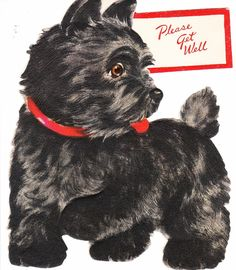 Vintage Get Well Greeting Card, Scottie Dog, 1950's by ilovevintagestuff on Etsy