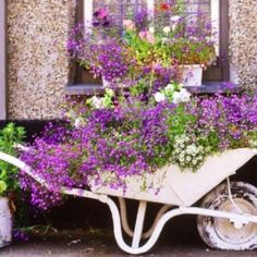 Contemplating on whether I should keep our old one rusty, or if I should paint it... This white wheelbarrow with lavender flowers look really pretty though!