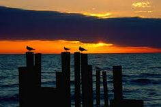 Florida sunsets - Google Search