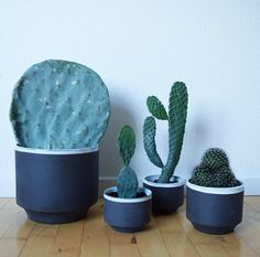 Cactus from france and denmark, i love the big one to the left.