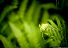 Fern by Sebastian Lacherski on 500px