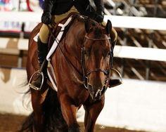 Hunter Under Saddle Cute Horses, Horse Love, Crazy Horse, Pretty Horses, Most Beautiful Animals, Beautiful Horses, American Quarter Horse, Quarter Horses, Hunter Under Saddle