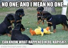 funny caption mafia dogs no one will know what happened here
