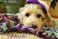 Purple | mygbgvlife