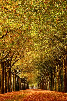 Amsterdam in herfst pracht...