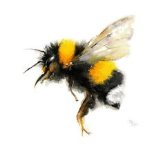 Bee watercolor painting Bumble Bee Art Print. Nature Illustration. (1,190 DOP) ❤ liked on Polyvore featuring home, home decor, wall art, animals, animal paintings, watercolor wall art, paper wall art, watercolour painting and watercolor painting