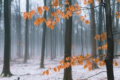 Winter Forest Landscapes with Orange Leaves Forest Photography, Aerial Photography, Landscape Photography, Forest Landscape, Abstract Landscape, Fine Art Photo, Photo Art, Orange Leaf, Landscape Photos