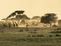 Safaris paisaje atardecer en Kenya
