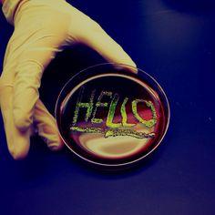 Goldfish bowl microbes- E.coli on EMB