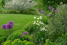 from country gardener blog - love the alliums, white trumpeter tulips and white crabapple
