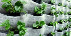 vilten plantzak voor bijvoorbeeld aardbeien of andere verticale planten