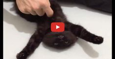 Click to see a feral cat's reaction to having her belly rubbed for the first time.