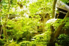 Kyoto, Giouji 祇王寺