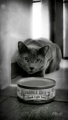 closing in on the prize , This adorable picture reminds me of my cat Shadow it's amazing .I love it.