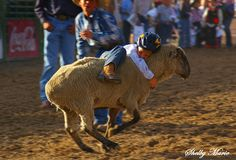 the best rodeo activity. ever.