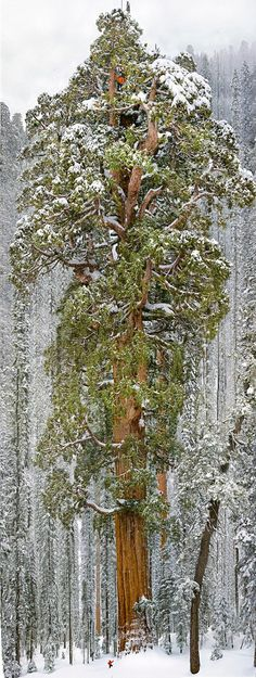 Treefort!: Giant Ass Tree Captured In A Single Image
