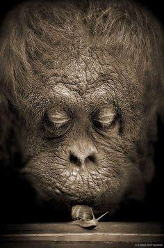 of With - Haustierfotografie - Nature Animals, Animals And Pets, Baby Animals, Funny Animals, Cute Animals, Animals Planet, Wild Animals, Primates, Mammals