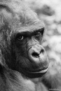Zoo Beauval - sbrodphoto