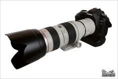 """Canon 5D Mark II with 70-200mm f/2.8 and Canon 2x Extender"" By Dario Rosas"