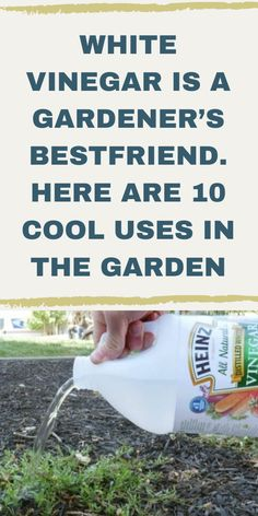 Garden Yard Ideas, Lawn And Garden, Garden Tub, Garden Projects, Gardening For Beginners, Gardening Tips, Bucket Gardening, Growing Vegetables In Containers, Regrow Vegetables