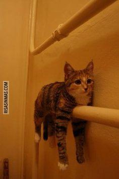 Mi gato descansando sobre una tubería.