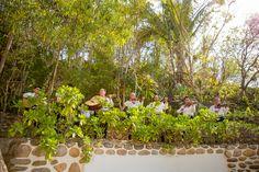Adventure Weddings, the best weddings destinations in Mexico. Venues: Las Caletas and Majahuitas, Puerto Vallarta, and Punta Venado Riviera Maya near Cancun Wedding Venues Beach, Destination Wedding, Mexican Mariachi, Puerto Vallarta, Amazing Destinations, Mexico, Entertaining, Adventure, Plants