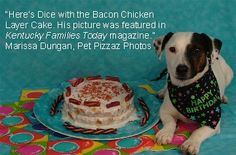 Chicken birthday cake frosted with yogurt and topped with bacon. Home-made doggie birthday cakes!