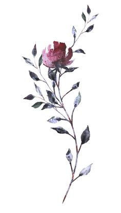 - rosss - - rosss - Fine Line Flower Tattoo with Hidden Initial Let Art Floral, Watercolor Flowers, Watercolor Paintings, Poppies Painting, Watercolour, Cute Wallpaper Backgrounds, Flower Wallpaper, Cute Wallpapers, Line Flower