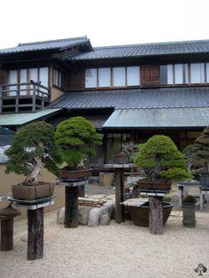 Part of the Shunka-En, the garden of Mr. Kobayashi. #Bonsai #BonsaiMaster #BonsaiLife #盆栽 #KunioKobayashi Picture from www.bonsaiempire.com