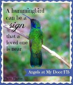 Pinned by sherry decker Hummingbird Meaning, Hummingbird Quotes, Hummingbird Symbolism, Hummingbird Moth, Hummingbird Necklace, Fox Tattoos, Tree Tattoos, Deer Tattoo, Raven Tattoo