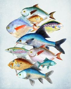 Fish Art Print Les Poissons Collage Natural by vintagebytheshore Illustration Photo, Illustrations, Watercolor Fish, Watercolor Paintings, Art Aquarelle, Sea Art, Fish Print, Sea Creatures, Collage Art