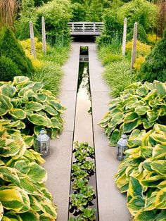 Long, narrow space and no room for a water feature? Think again! | 10 tips for building a water garden | Living the Country Life | http://www.livingthecountrylife.com/gardening/10-tips-for-building-a-water-garden/?esrc=nwlc062713=dm17.676894