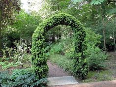 taxus arch at Pine Lodge