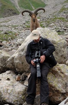 Goat behind bolder looking at photographer