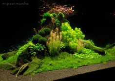 Amazing aquascape , pic shared by The Green Machine ..... Pin by Aqua Poolkoh