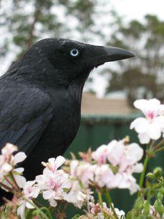 Raven4 by Heather Blakey, via Flickr