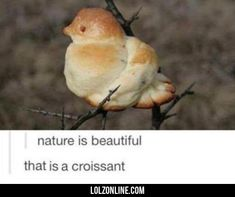 Nature Is Beautiful...#funny #lol #lolzonline