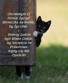 Dory, Good Day, Motto, Wish, Decoupage, Happy Birthday, Humor, Cats, Funny