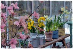 Suvikumpu Plants, Plant, Planets