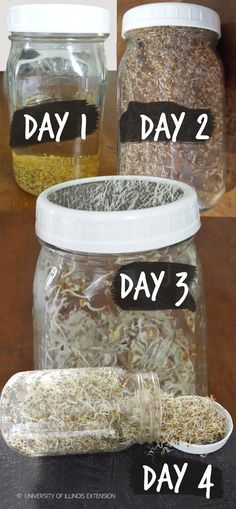 Steps for Successful Sprouting at Home! #garden