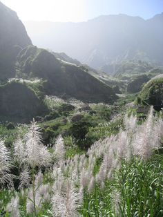 Sugarcane Paradise - Cape Verde
