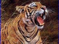 Tiger Roar Wallpaper 133 High Quality