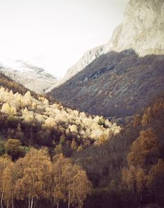 Fall in the mountains with beautiful light