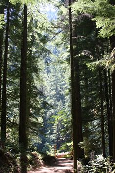 Eagle Creek Trail above Punchbowl Falls.  Columbia Gorge. OR.  08/2010.