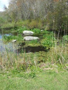 Norman bird sanctuary Norman, Bird, Mountains, Nature, Travel, Naturaleza, Viajes, Birds, Destinations